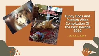Funny Dogs And Puppies Video Compilation Of The Past Decade 2020