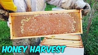 Honey Harvest 2018 - Part 1