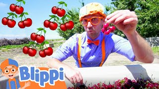 Blippi Visits a Cherry Farm | Healthy Eating For Children | Educational Videos For Kids