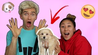 SURPRISING STEPHEN WITH A PUPPY!! (EMOTIONAL)